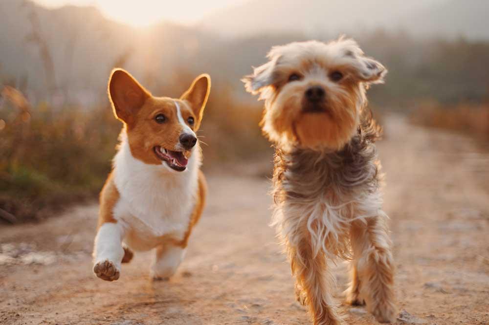 Dogwood Kennels - Daycare
