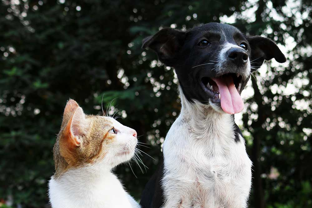 Dogwood Kennels - Pet Boarding